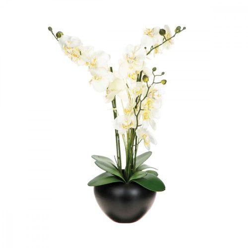 Orchidea fekete kaspóban