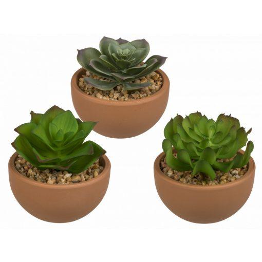 Növény dekoráció terracotta edényben