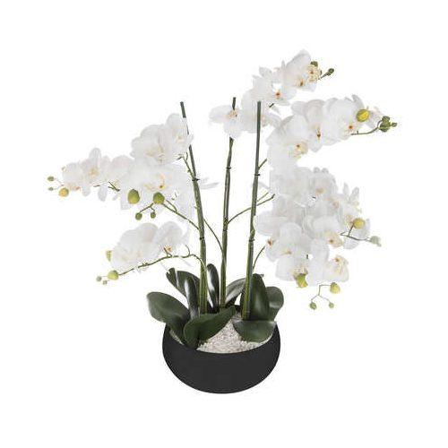 Orchidea fekete kaspóban 65cm